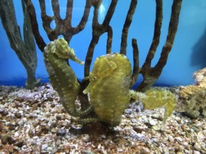 Sarasota FL Mote Marine Laboratory & Aquarium